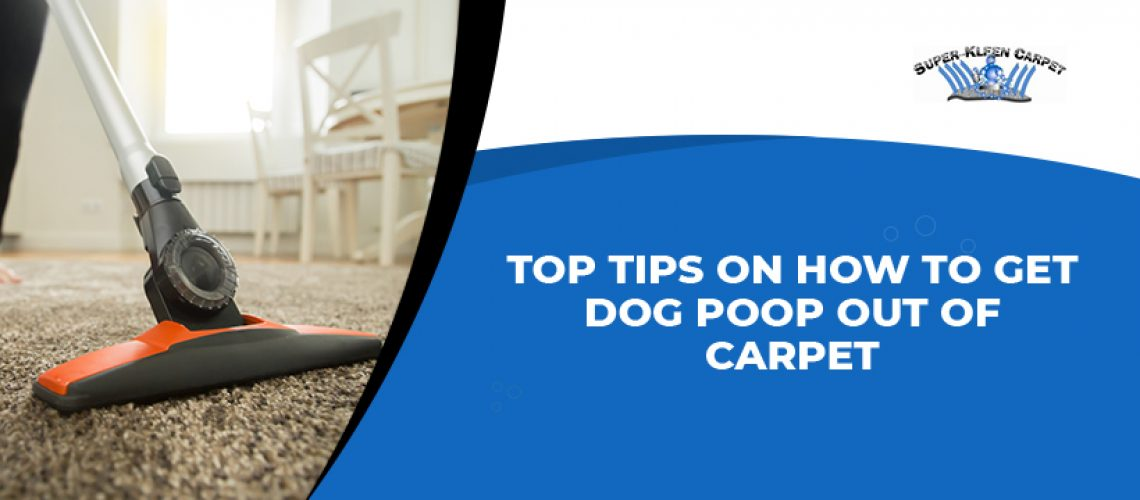 Top Tips on How to Get Dog Poop Out of Carpet;